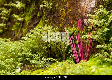 Incense sticks on a mossy weathered wall, Hoi An, Viet Nam - Stock Image
