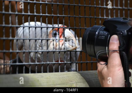 Photographer with a curious parrot at the Tropical Wings Zoo, Chelmsford, Essex, UK. This zoo closed in December 2017. - Stock Image