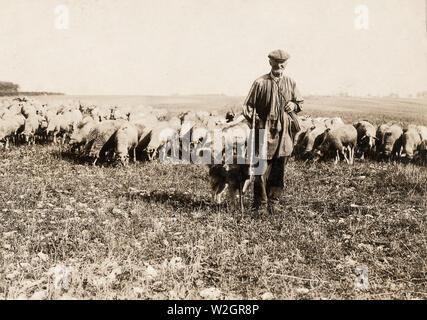 Shepherd in field in France ca. 1918 - Stock Image