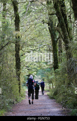 Hikers walking down a path lined with tall trees, Milford Track, New Zealand. - Stock Image