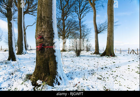 Snow-covered trees on top of Liddington Hill near Swindon, Wiltshire. - Stock Image