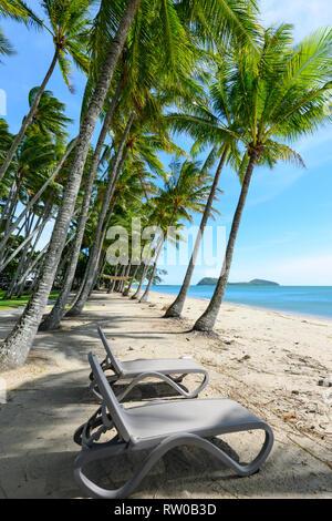 Sun loungers under bent palmtrees along the beach, Palm Cove, Cairns Northern Beaches, Far North Queensland, QLD, FNQ, Australia - Stock Image