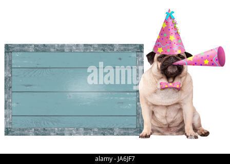 cute pug puppy dog with pink party hat and horn and blank  blue old wooden sign, isolated on white background - Stock Image
