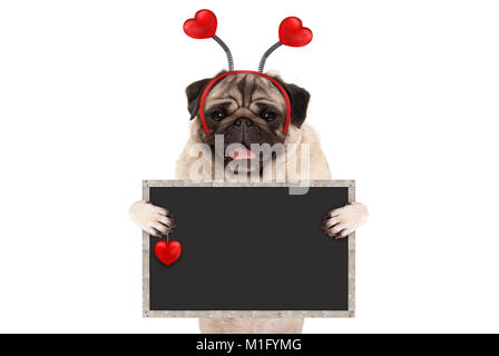 happy smiling Valentine's day pug puppy dog with hearts diadem and blank blackboard sign in paws, isolated on - Stock Image
