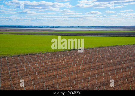 Cultivation field. Manjavacas, Cuenca province, Spain. - Stock Image