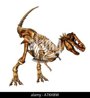 Tyrannosaurus rex dinosaur skeleton - Stock Image
