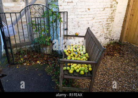 Free windfall apples Milton Cambridge, UK - Stock Image