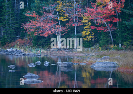 Autumn color reflected in Eagle Lake in Acadia National Park - Stock Image