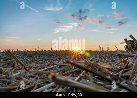 Sunset over a harvested agricultural corn field - Stock Image