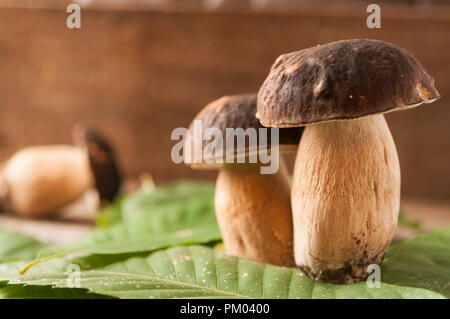 Porcini mushrooms (boletus edulis) on a wooden table with blurred background and copy space - Stock Image