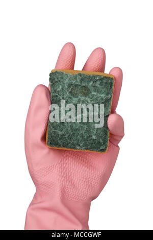 Hand in pink rubber glove holding a grungy dish sponge isolated on white background; - Stock Image