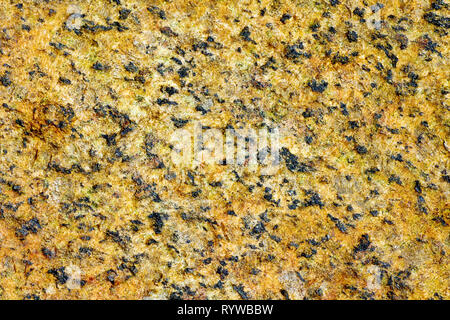 Close up, abstract image of the speckled pattern on a rock on the beach. - Stock Image