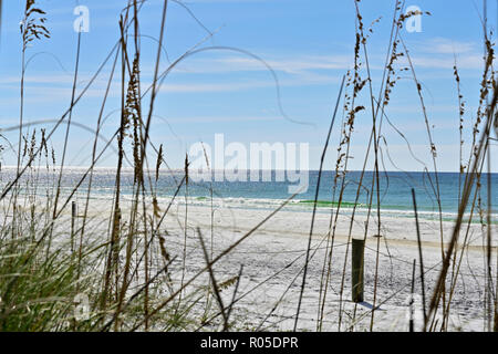 View of protected sea oats and the Gulf of Mexico along white sand or sandy Florida Gulf Coast beach in the Florida panhandle, USA. - Stock Image