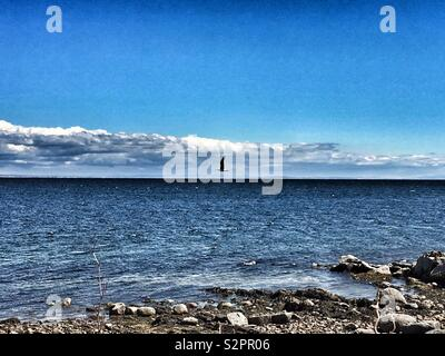 A seagull flying over the blue sea. - Stock Image
