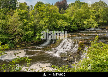 Middle Falls, Aysgarth, Wensleydale, Yorkshire Dales National Park, UK in late spring with very low water level - Stock Image