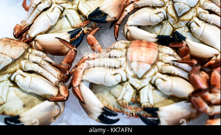 Close-up of fresh seafood crabs on display at a local fishmongers market in Essex England - Stock Image