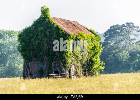 Overgrown tin-roofed house in the foothills of the North Georgia Mountains. (USA) - Stock Image