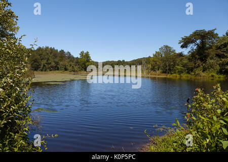 View of the beaver pond and North Cumberland WMA - Stock Image