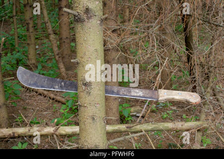 machete wedged by the blade into a tree trunk prior to felling in zala county hungary - Stock Image