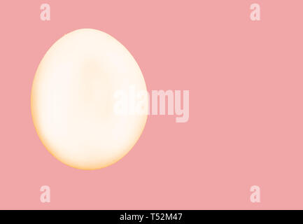 One white egg with gold outline isolated on pink background with clipping path included, copy space. - Stock Image