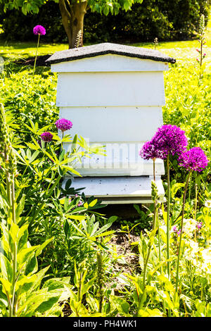 bee hive, beehive, hives, hive, apiary, wooden beehive, bee hives, beehives, white beehive, wooden apiary, apiaries, Beehaus, beehive garden, garden - Stock Image