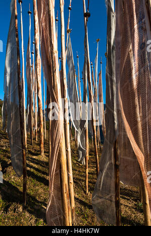 Collection of wooden poles with pink and white Buddhist prayer flags near Yotong La, Trongsa, Bhutan - Stock Image
