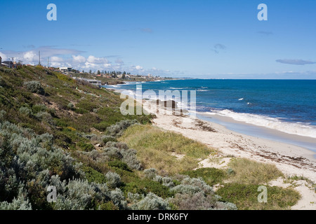 Looking south across restored native vegetation at Marmion beach. Perth, Western Australia. - Stock Image