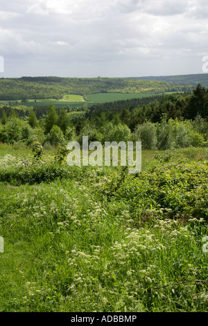A View of the Chiltern Hills from Wendover Forest, Buckinghamshire, UK - Stock Image