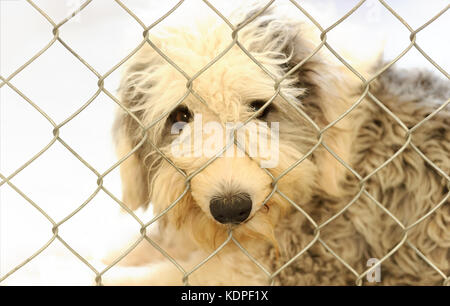 Animal shelter is an animal dog  shelter with a sad cute dog looking up wanting someone to take him home today. - Stock Image