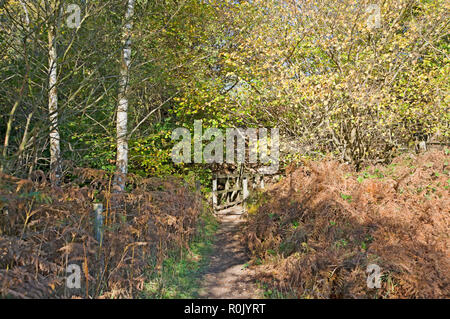 Footpath to Beck Hole North York Moors North Yorkshire England UK United Kingdom GB Great Britain - Stock Image