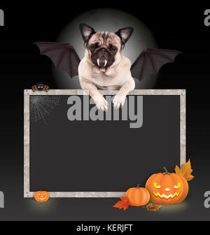 Halloween bat pug dog with wings and paws on blank blackboard sign, with pumpkin lantern, isolated on dark background - Stock Image