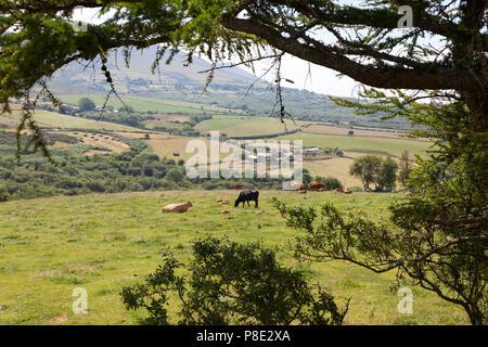View over farmland, Llanllyfni, Gwynedd - Stock Image