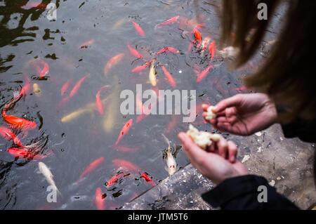 Lake fish - Stock Image