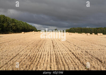 Field of hay - Stock Image