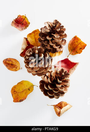 Autumn leaves and pine cones on a white background. - Stock Image