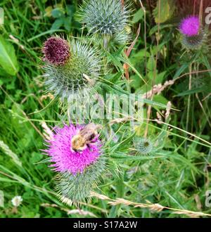 Busy bee. - Stock Image
