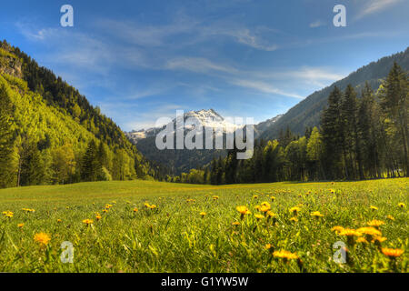 French meadow - Stock Image