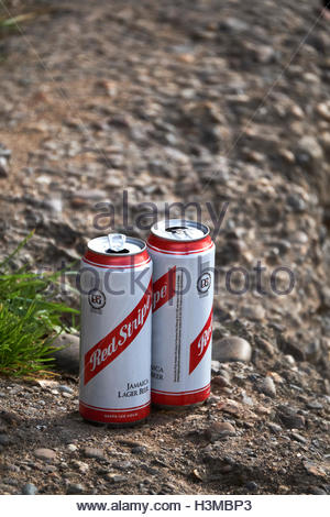 Nottingham, England, 9 October 2016  Empty Red Stripe beer cans, litter in park near Beeston Weir, outdoor drinking - Stock Image