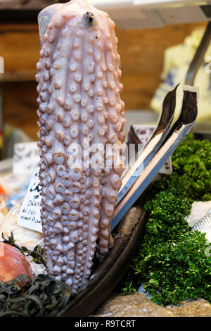 Borough Market fish stall display with fresh octopus squid seafood vertical view and parsley for sale in November London England UK  KATHY DEWITT - Stock Image