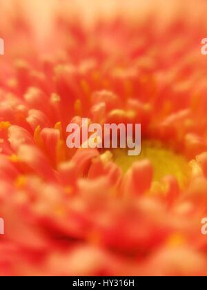 Macro Shot Of Red Flower - Stock Image