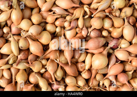 Overhead shot of many seed onions creating a vegetable themed background - Stock Image