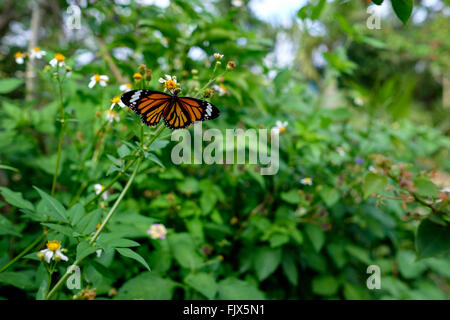Butterfly On Flowers Blooming In Garden - Stock Image
