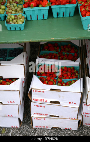 Crates of strawberries and gooseberries at a farmers market, Hastings-On-Hudson, NY, USA - Stock Image