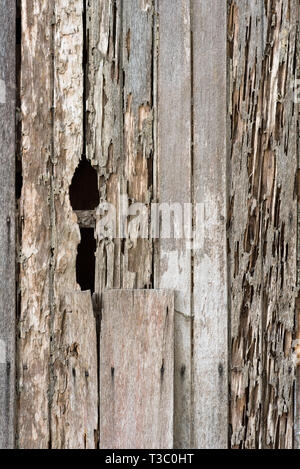 full frame image of a damage wooden house wall because of a termites problem. concept of nature, pests and wood background - Stock Image