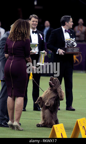 New York, USA. 12th Feb 2019. Westminster Dog Show - New York City, 12 February, 2019:  Sussex Spaniel GCH CH Kamand's Full of Beans, or Bean for short, celebrates with his handler after winning the Sporting Group at the 143rd Annual Westminster Dog Show, Tuesday evening at Madison Square Garden in New York City.  It was the second straight year he won the group. Credit: Adam Stoltman/Alamy Live News - Stock Image