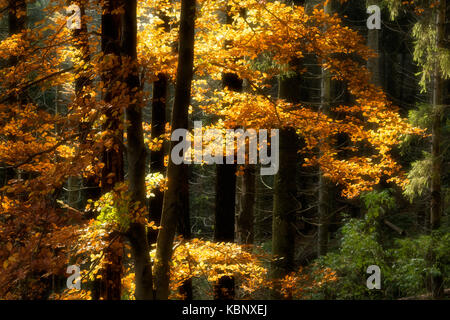 rays of sun on plants in the forest during the autumn season, Regional Park of Campo dei Fiori Varese - Stock Image