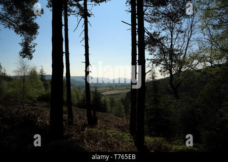 View from Boltby Forest near Sneck Yate Bank, Boltby, Thirsk, North Yorkshire - Stock Image