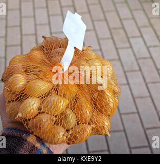 Hand holding plastic net with small seed onions - Stock Image