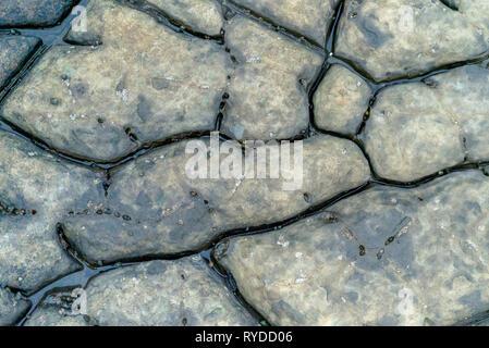 Fossiliferous Vegetation Markings on Maple Ledge Dolomite Beds at Kimmeridge Bay in Dorset UK - Stock Image