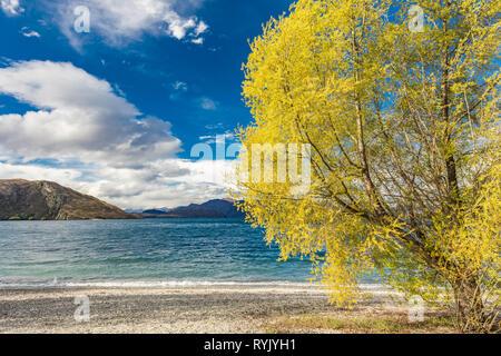 New Zealand landscape, Lake Wanaka, Glendhu Bay - lake and trees - Stock Image